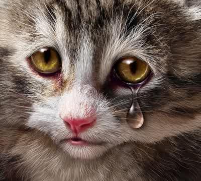 Unduh 100+  Gambar Kucing Sedih Dengan Kata Kata Paling Baru Gratis